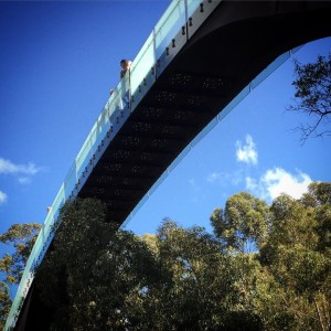 Elevated walkway kingspark perth perthtoday